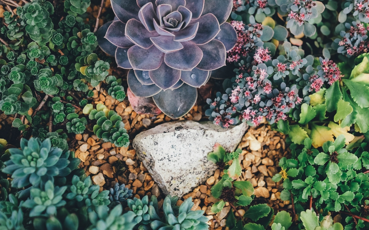 example of succulents